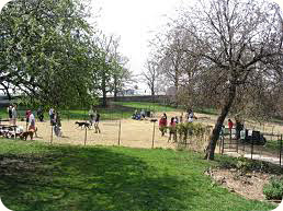 dog park in new york