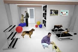 pet daycare in new york