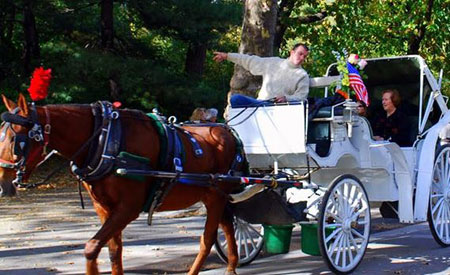 central park horse carriage rides